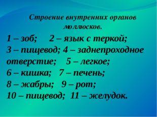 1 – зоб; 2 – язык с теркой; 3 – пищевод; 4 – заднепроходное отверстие; 5 – ле
