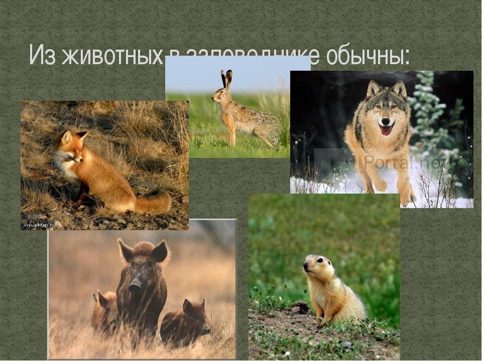 Из животных в заповеднике обычны: