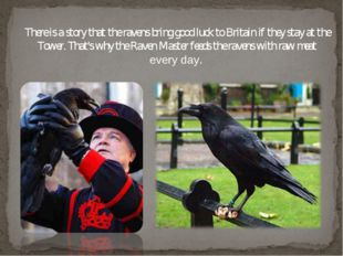 There is a story that the ravens bring good luck to Britain if they stay at t