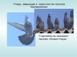 Птицы, зимующие в окрестностях поселка Черемисиново. Старожилы их называют л