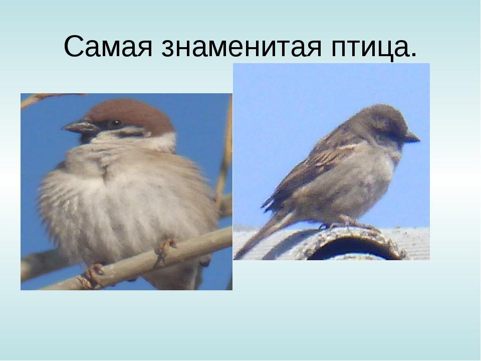 Самая знаменитая птица.