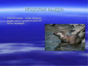 Морская выдра Морская выдра – калан. Морские выдры часто становятся добычей б