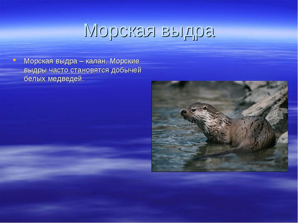 Морская выдра Морская выдра – калан. Морские выдры часто становятся добычей б...