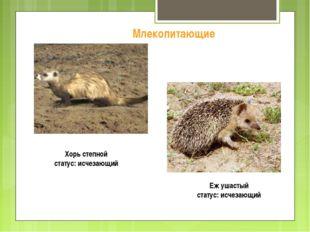 Хорь степной статус: исчезающий Млекопитающие Еж ушастый статус: исчезающий