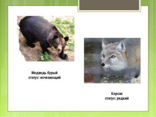 Медведь бурый статус: исчезающий Корсак статус: редкий