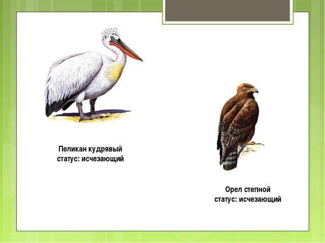 Пеликан кудрявый статус: исчезающий Орел степной статус: исчезающий