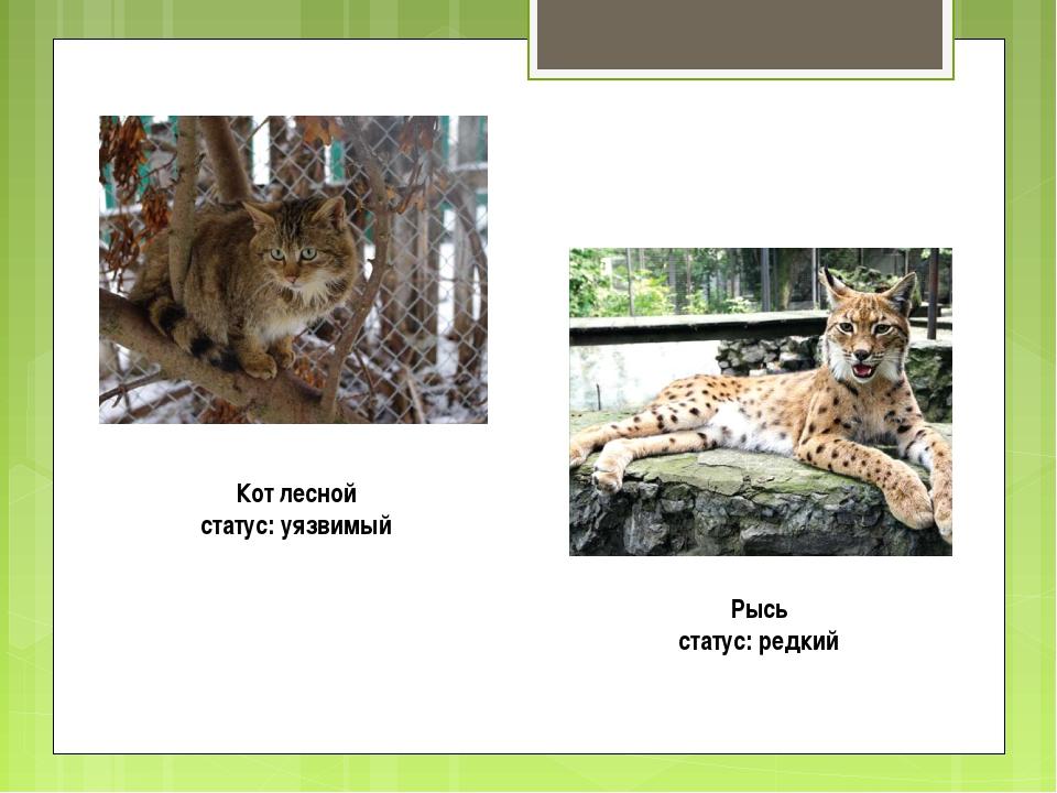 Кот лесной статус: уязвимый Рысь статус: редкий