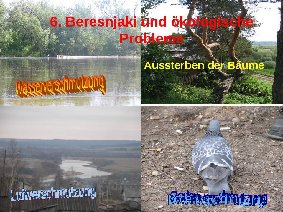 6. Beresnjaki und ökologische Probleme Aussterben der Bäume