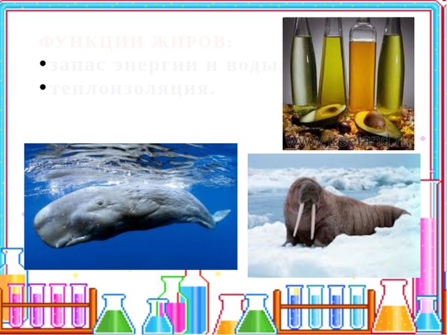 ФУНКЦИИ ЖИРОВ: запас энергии и воды; теплоизоляция.