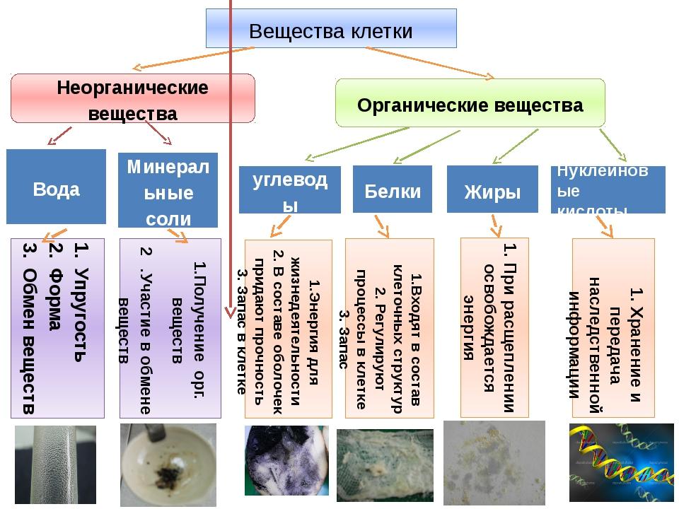 Вещества клетки Вода углеводы Белки Жиры Нуклеиновые кислоты Неорганические в...
