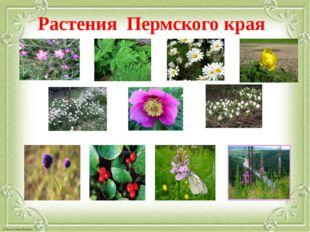 Растения Пермского края