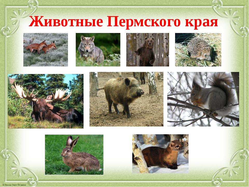Животные Пермского края