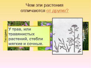 Гвоздика Колокольчик Ромашка