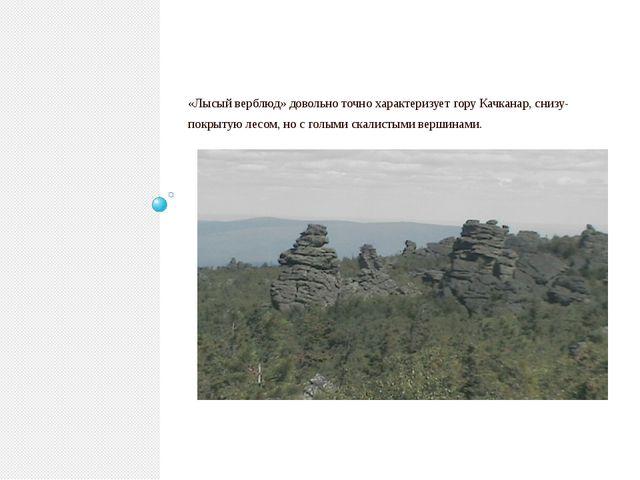 «Лысый верблюд» довольно точно характеризует гору Качканар, снизу- покрытую...
