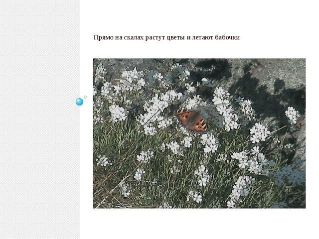 Прямо на скалах растут цветы и летают бабочки