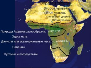 Природа Африки разнообразна. Здесь есть Джунгли или экваториальные леса Джун