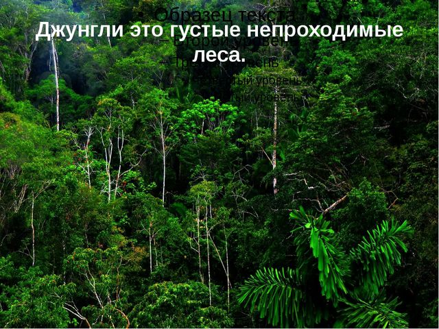 Джунгли это густые непроходимые леса.