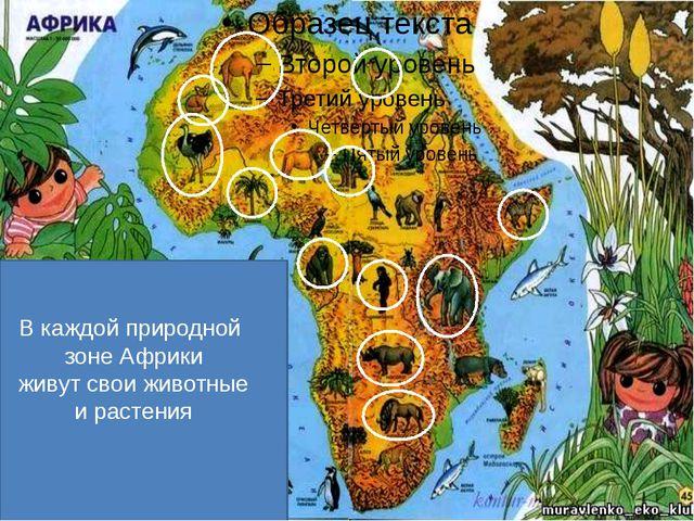 В каждой природной зоне Африки живут свои животные и растения