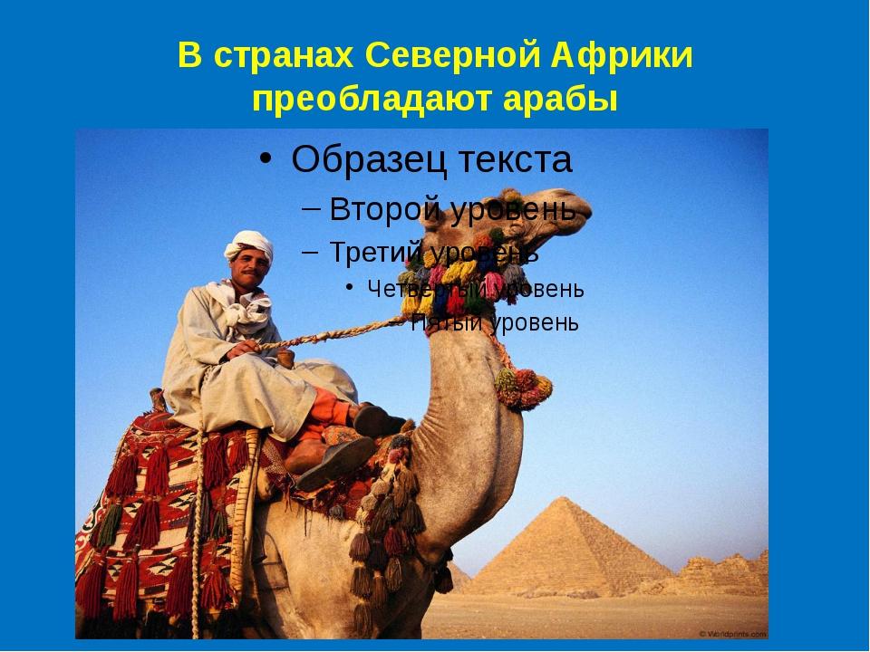В странах Северной Африки преобладают арабы