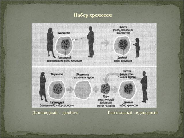 Диплоидный – двойной. Гаплоидный –одинарный. Набор хромосом