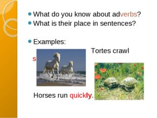 What do you know about adverbs? What is their place in sentences? Examples: