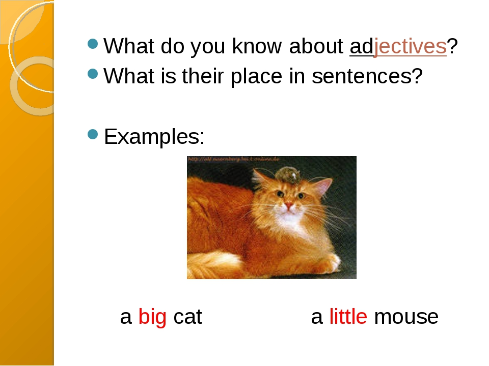 What do you know about adjectives? What is their place in sentences? Examples...
