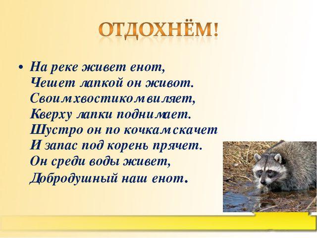 На реке живет енот, Чешет лапкой он живот. Своим хвостиком виляет, Кверху лап...