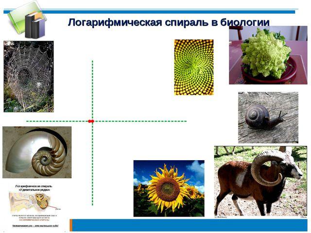 Логарифмическая спираль в биологии