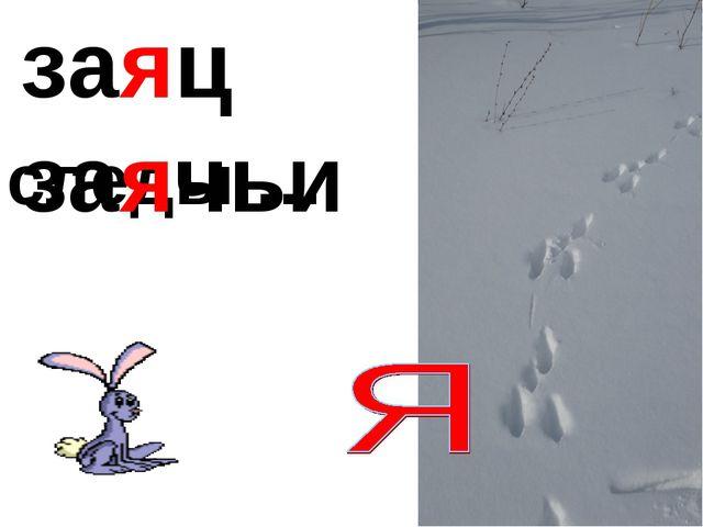 заяц следы … заячьи