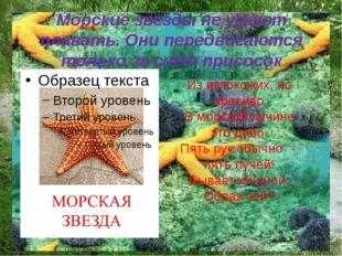 Морские звезды не умеют плавать. Они передвигаются только за счет присосок Из