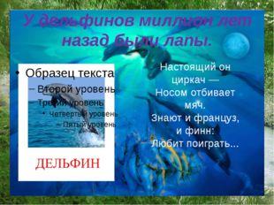 У дельфинов миллион лет назад были лапы. Настоящий он циркач — Носом отбивает