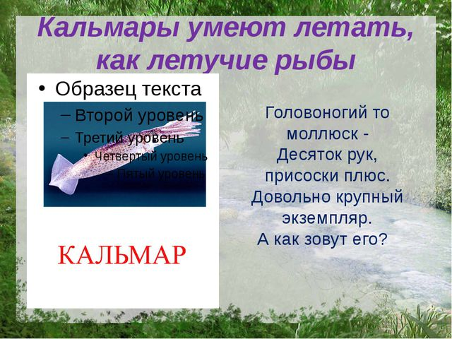 Кальмары умеют летать, как летучие рыбы Головоногий то моллюск - Десяток рук,...