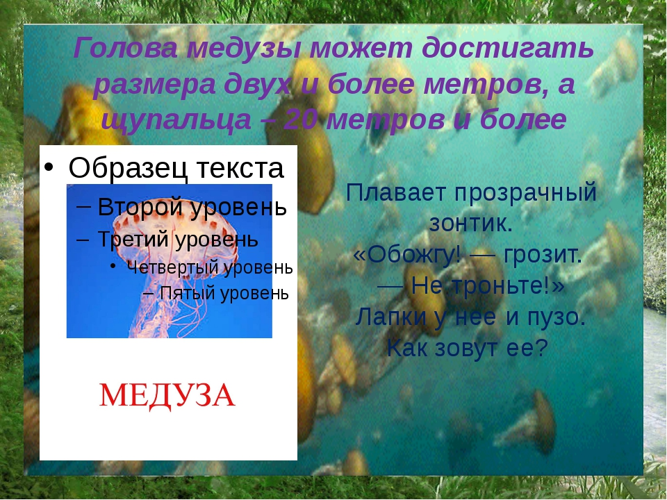 Голова медузы может достигать размера двух и более метров, а щупальца – 20 ме...