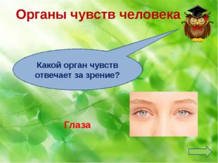 Органы чувств человека Язык Какой орган чувств отвечает за вкус? Ekaterina050