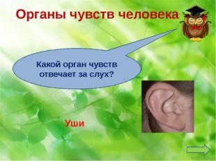 Органы чувств человека Кожа Какой орган чувств отвечает за осязание? Ekaterin
