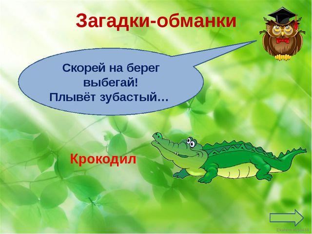 Загадки-обманки Скорей на берег выбегай! Плывёт зубастый… Крокодил Ekaterina0...