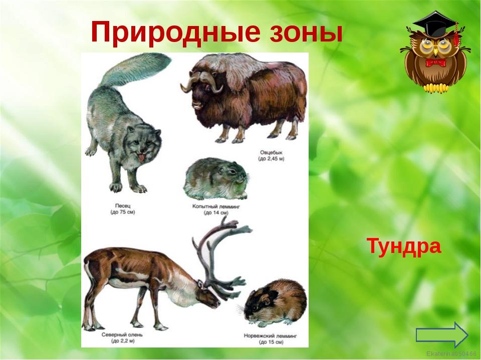 Пустыня Природные зоны Ekaterina050466