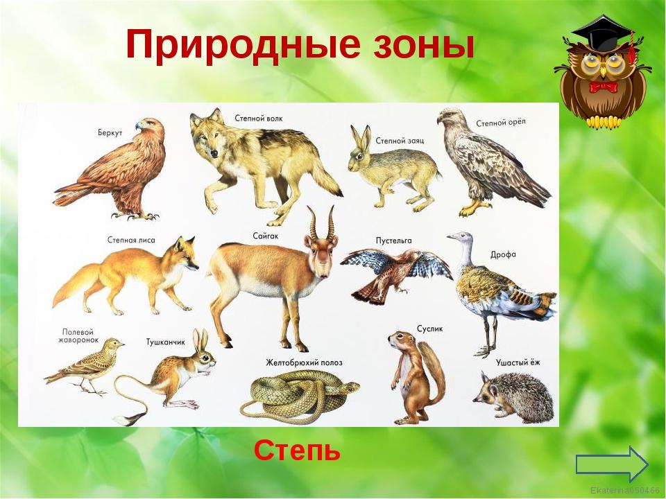 Арктика Природные зоны Ekaterina050466