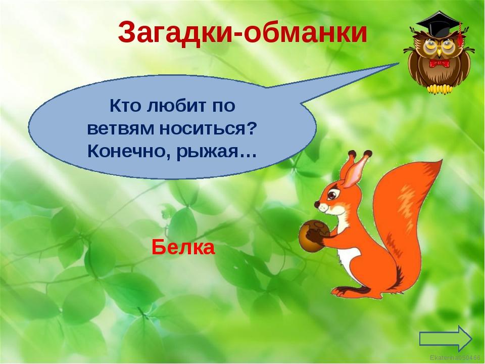 Загадки-обманки Кто любит по ветвям носиться? Конечно, рыжая… Белка Ekaterina...