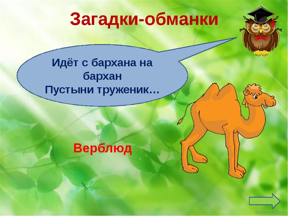 Загадки-обманки Идёт с бархана на бархан Пустыни труженик… Верблюд Ekaterina0...