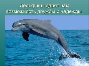 Дельфины дарят нам возможность дружбы и надежды.