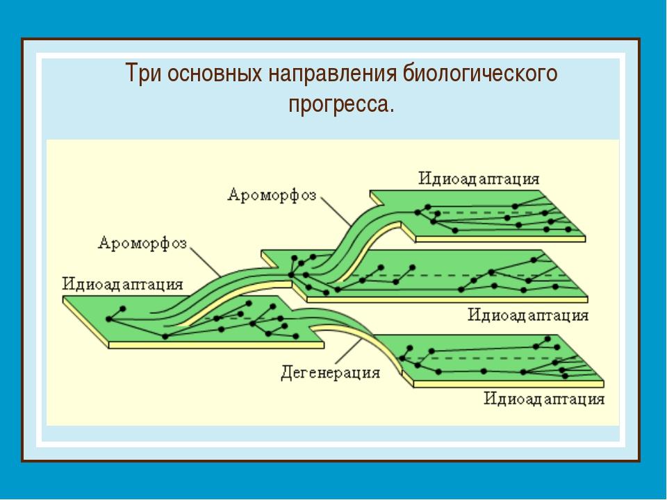 Три основных направления биологического прогресса.