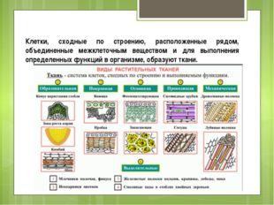 Клетки, сходные по строению, расположенные рядом, объединенные межклеточным в