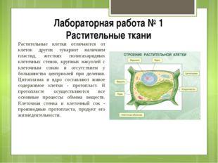 Лабораторная работа № 1 Растительные ткани Растительные клетки отличаются от