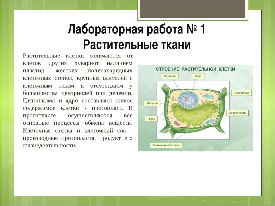 Лабораторная работа № 1 Растительные ткани Растительные клетки отличаются от...