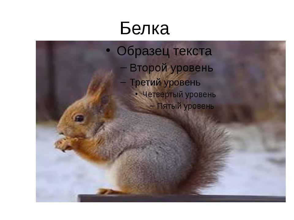 Белка