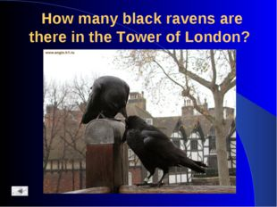 How many black ravens are there in the Tower of London?