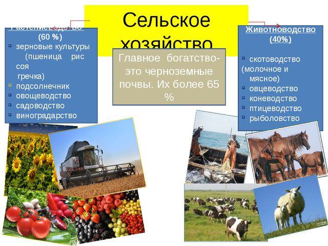 Сельское хозяйство Животноводство (40%) скотоводство (молочное и мясное) овце...