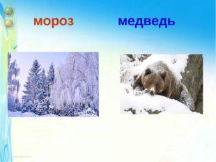 мороз медведь