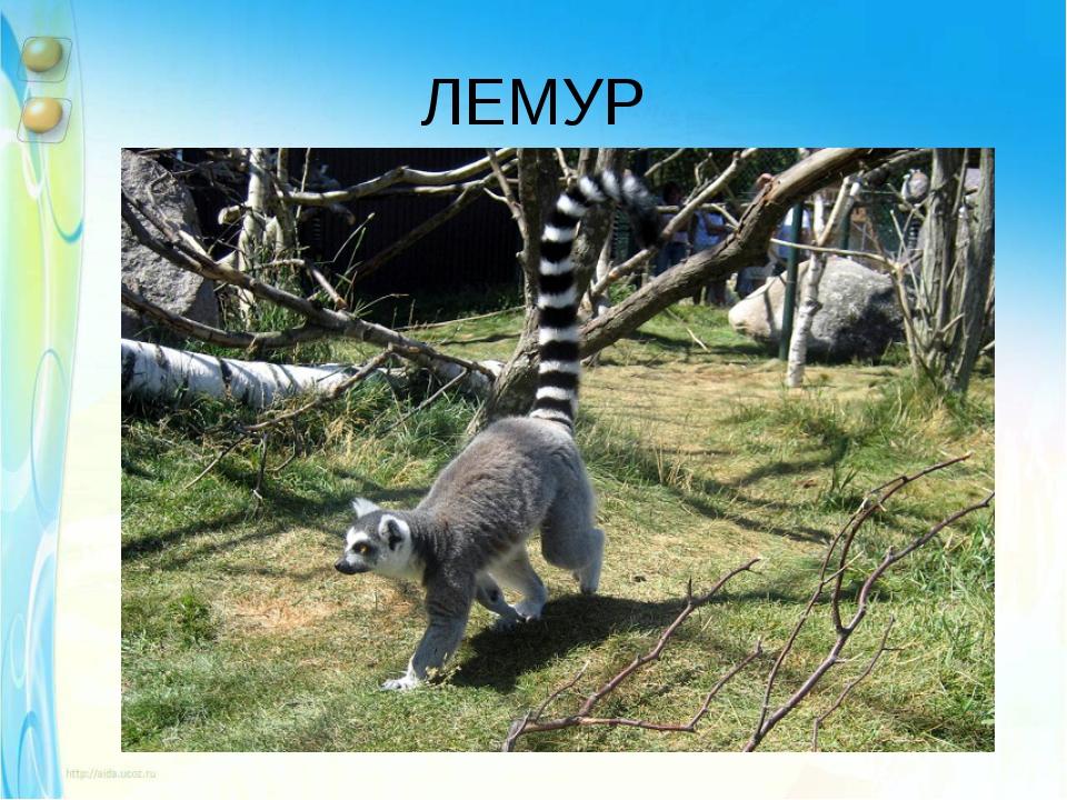 ЛЕМУР